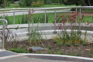 raingarden east end