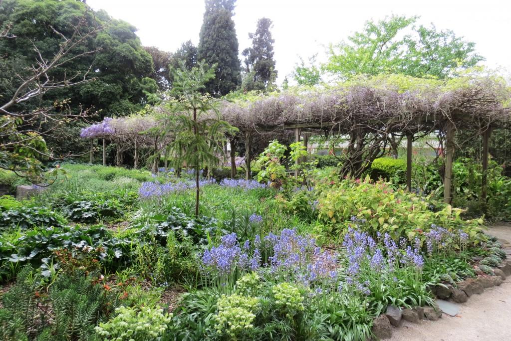 wisteria walk 2